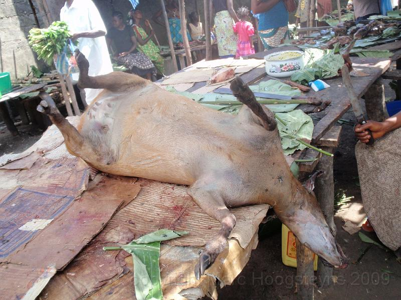 A poached antilope Lodja 2.jpg